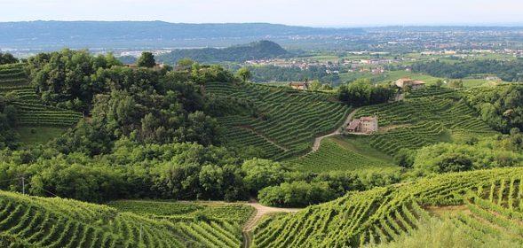 Cestování za vínem po Itálii